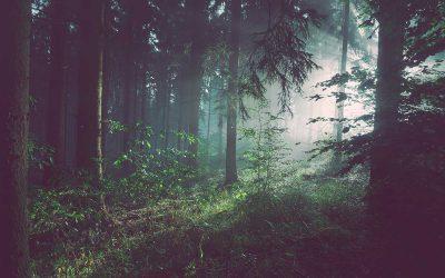 Forest app: riottieni la concentrazione